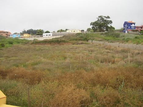 Grosses Finca mit 8000m2 Weinbau, verschiedene gebaute für festen, Tieren, Industriehalle. Immobilie zum Kauf - kanarenmakler