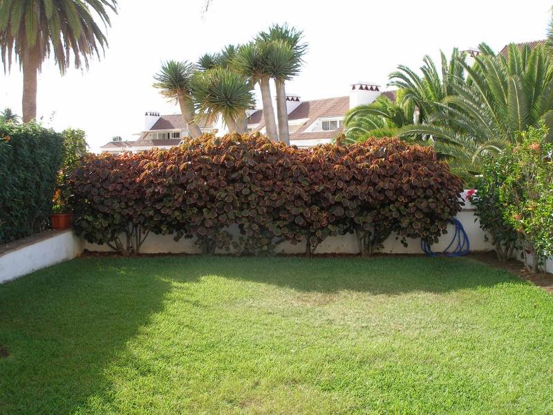 La Paz; Geräumiges Studio mit Terrasse und eigenem Garten!  Immobilie zur Miete - Paluum