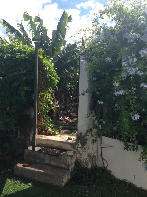 Einmaliges Appartement gelegen innerhalb den Banane Plantagen. Immobilie zur Miete - Paluum
